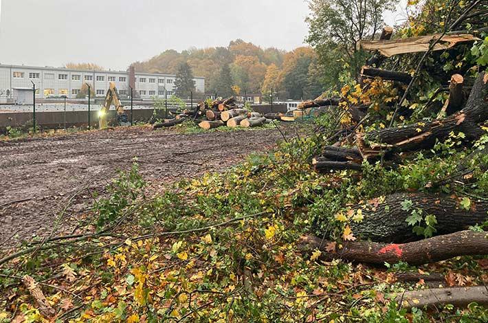 Blunk Umwelt Forst Baufeld Räumung Bäume fällen 33