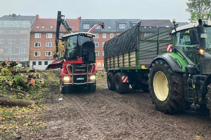 Blunk Umwelt Forst Baufeld Räumung Bäume fällen 35