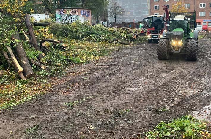 Blunk Umwelt Forst Baufeld Räumung Bäume fällen 36