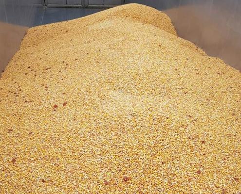 Blunk: Maisdrusch Körnermais 05