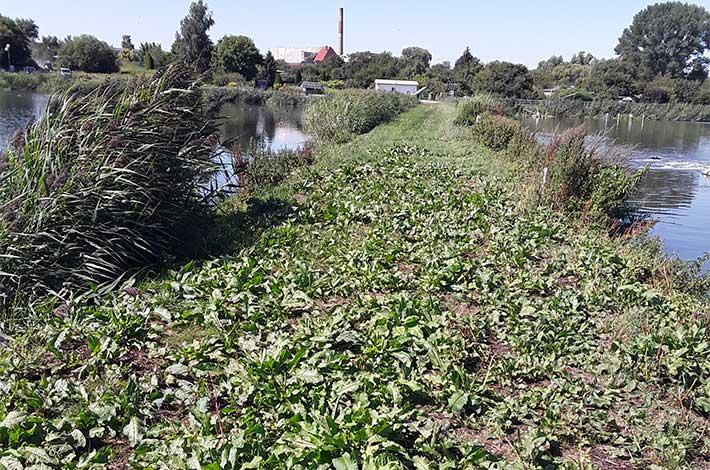 Blunk Umwelt Teich Entschlammung 03