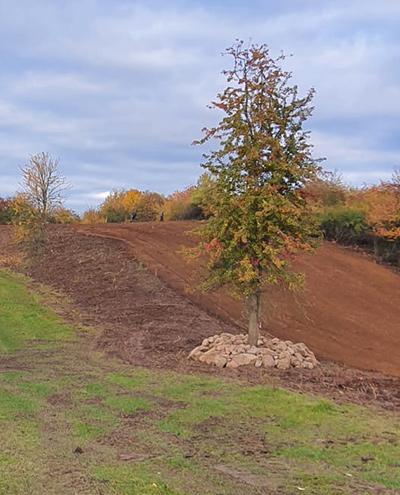 Blunk: Rodung und Räumung von Hangflächen für Weidebewirtschaftung - Findlinge am Baum