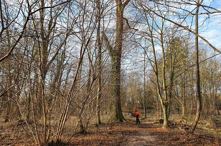 Blunk Umwelt-Team bei Baumfällung zur Gefahrenbeseitigung 04