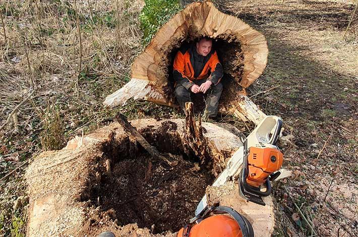 Blunk Umwelt-Team bei Baumfällung zur Gefahrenbeseitigung 06