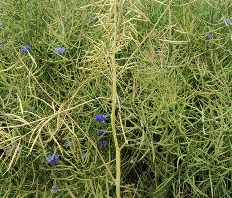 Pflanzenschutz von Blunk mit Partner Eichhof 05